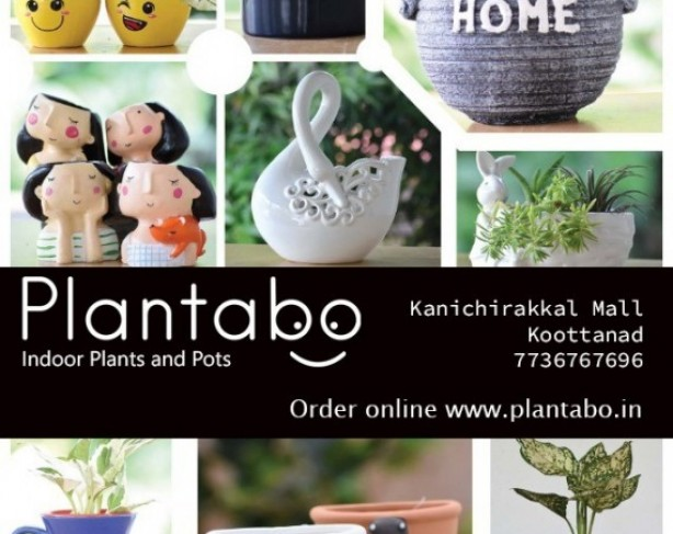 PLANTABO INDOOR PLANTS AND POTS